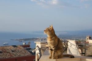 Sizilien Katze