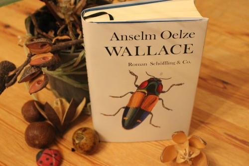 Anselm Oelze Wallace Schöffling